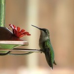 No, Google's Hummingbird Update Isn't A Soul Stealer